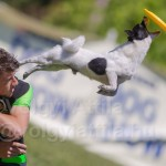Flydogs – frizbee gives wings to a dog