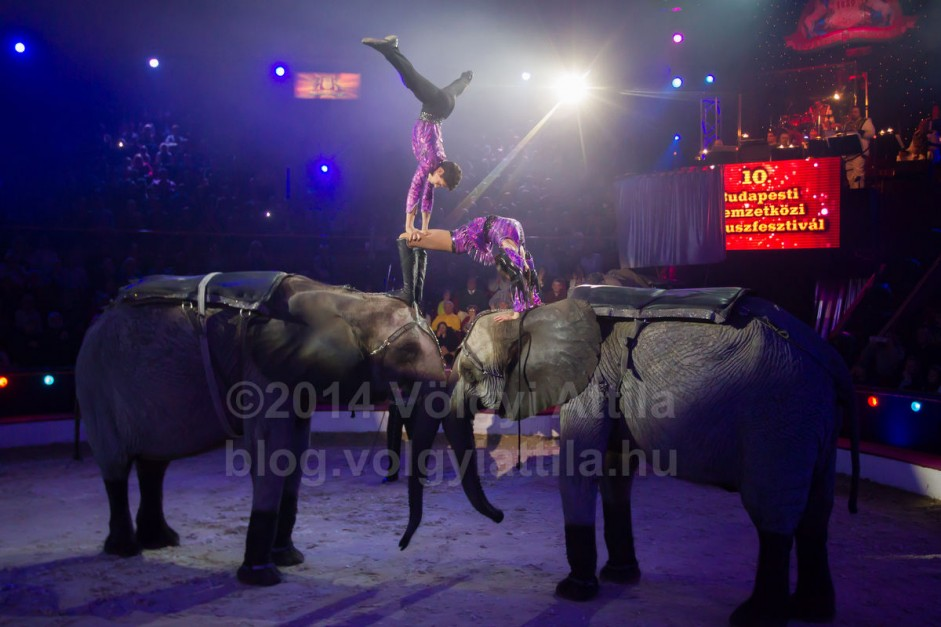 http://attilavolgyi.photoshelter.com/gallery/10th-International-Circus-Festival/G0000XCTr486xhtE/C0000C2_O1ptlcSM