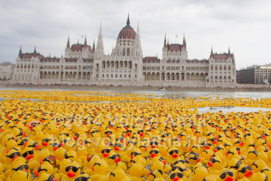 First ever rubber duck race in Budapest