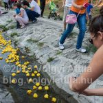 Rubber duck race in Szentendre