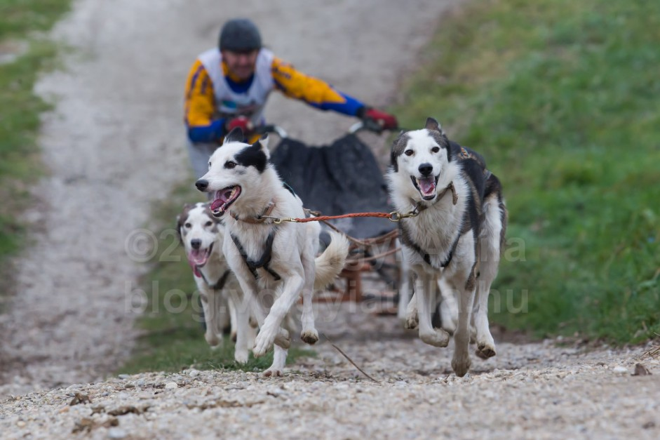 Sled dog European Championships