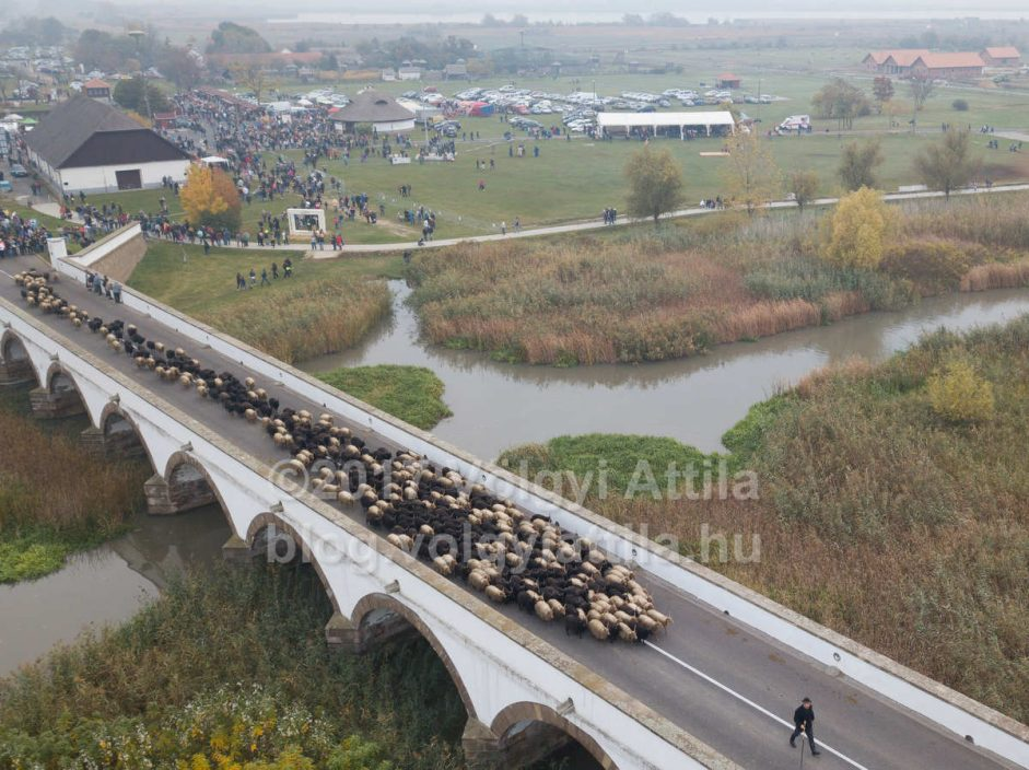 A flock of sheep crosses Nine holed bridge