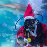Christmas with the sharks at Tropicarium
