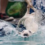 Funny splashes of diving dogs